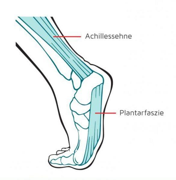 Achillessehne und Plantarfascie